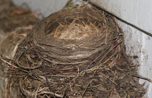 Nest1web